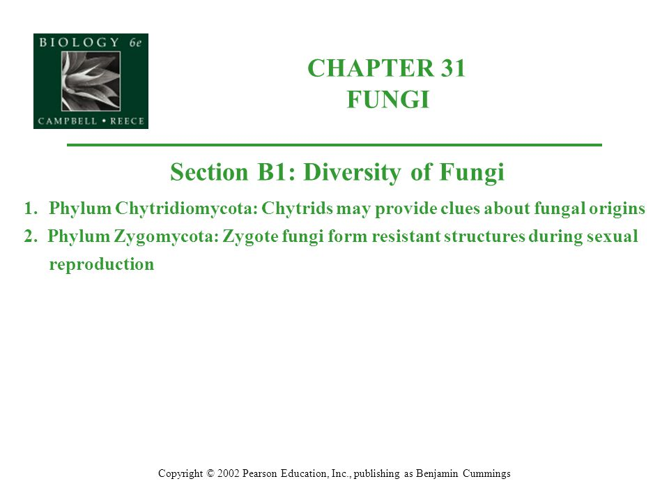 Section B1: Diversity of Fungi