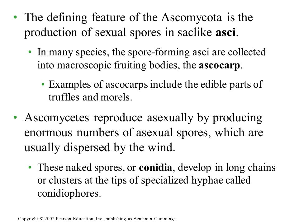 The defining feature of the Ascomycota is the production of sexual spores in saclike asci.