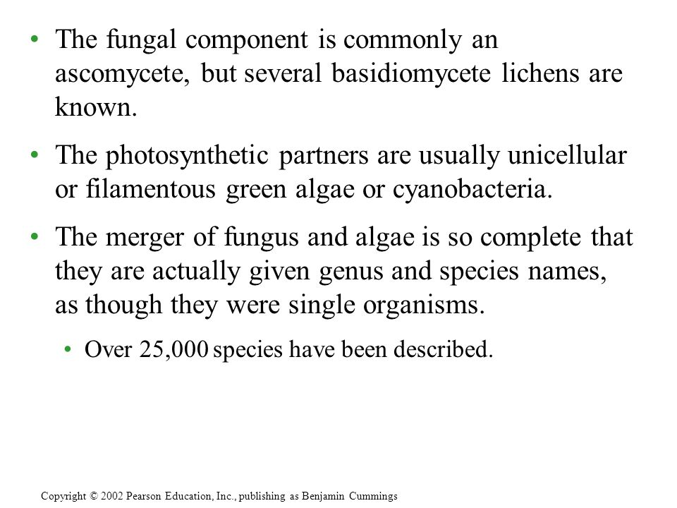 The fungal component is commonly an ascomycete, but several basidiomycete lichens are known.