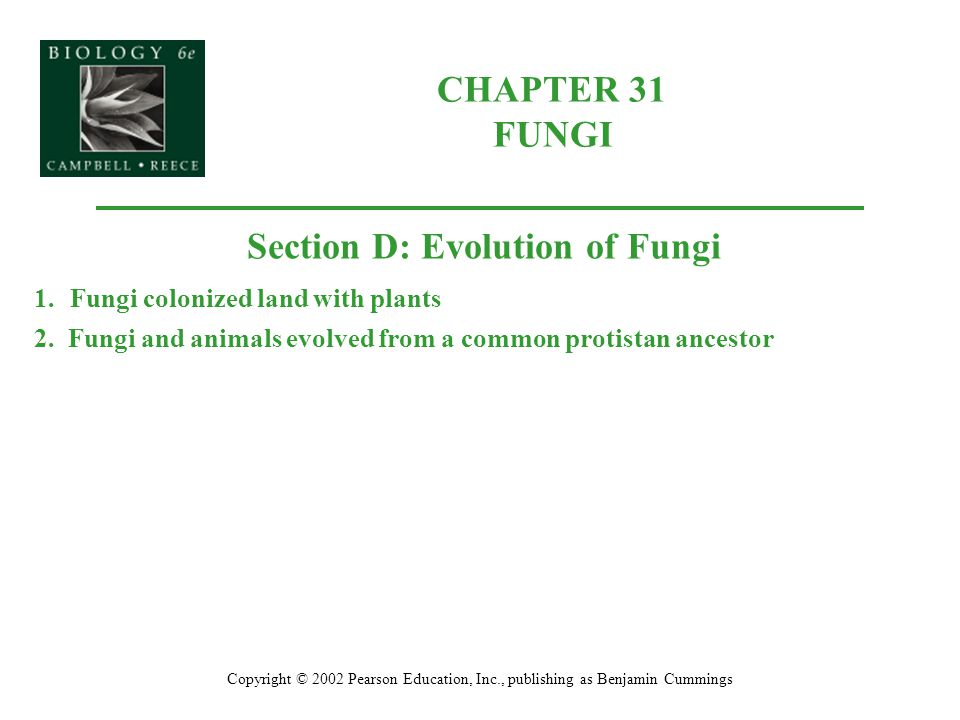 Section D: Evolution of Fungi