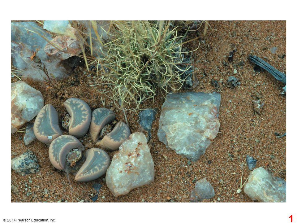 Figure 29.1 Plants or pebbles