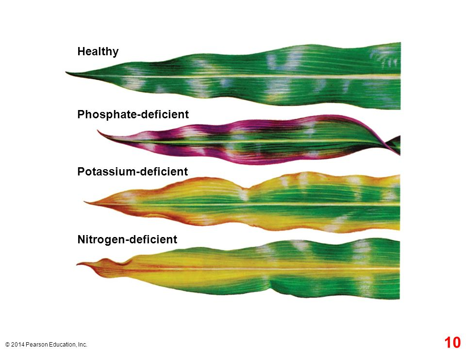 Healthy Phosphate-deficient Potassium-deficient Nitrogen-deficient