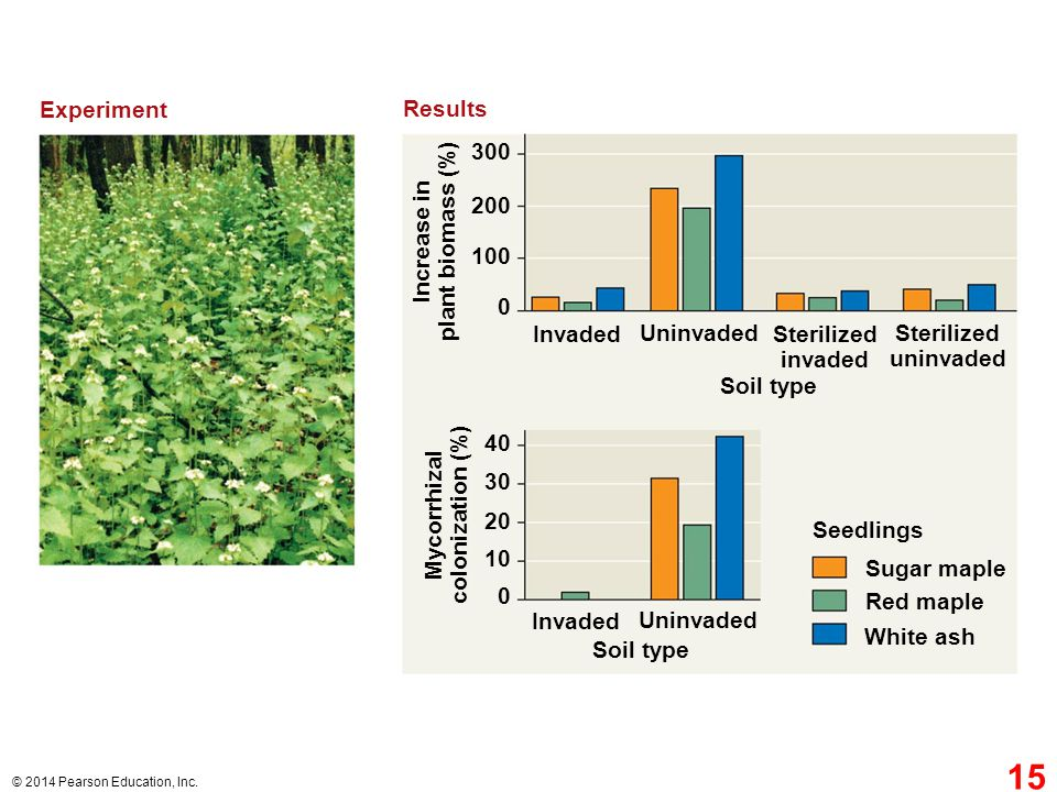 Experiment Results 300 200 plant biomass (%) Increase in 100 Invaded