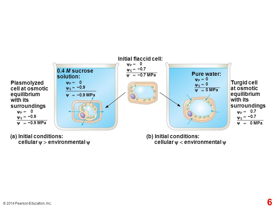 (a) Initial conditions: cellular   environmental 