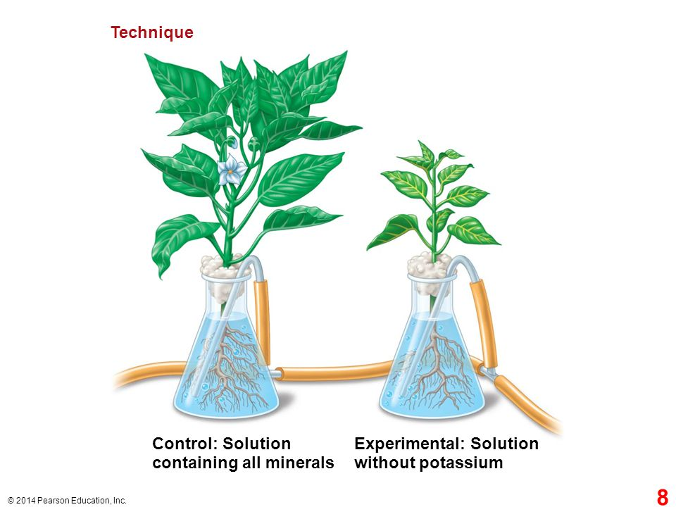 containing all minerals Experimental: Solution without potassium