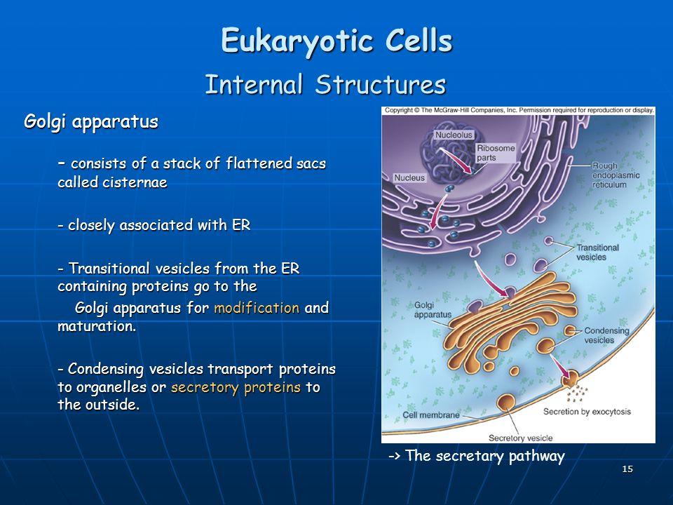 Eukaryotic Cells Internal Structures Golgi apparatus