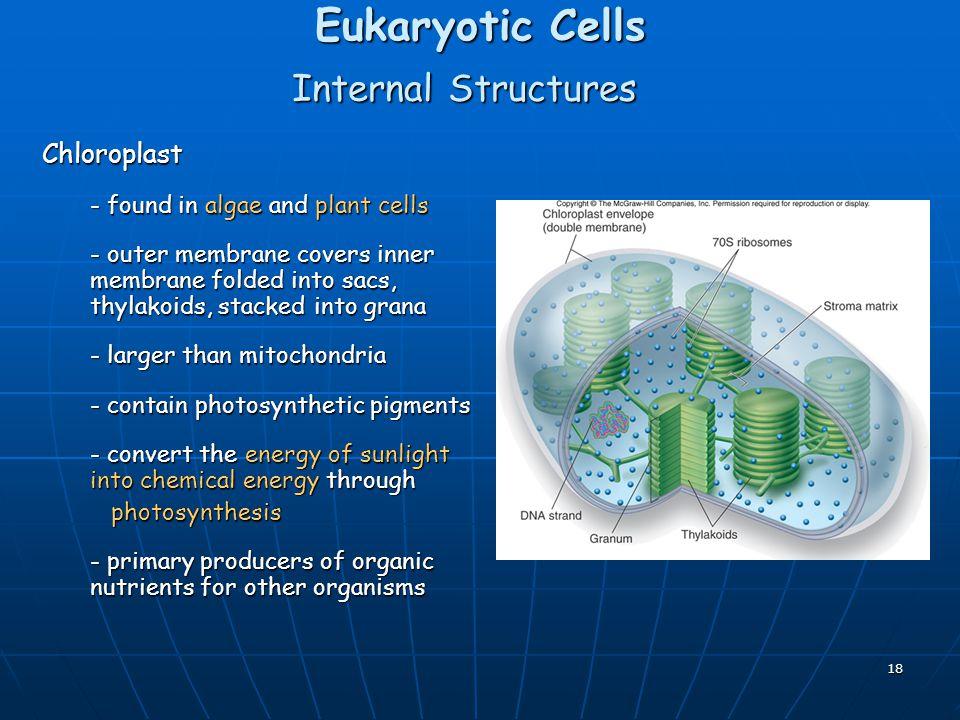 Eukaryotic Cells Internal Structures Chloroplast