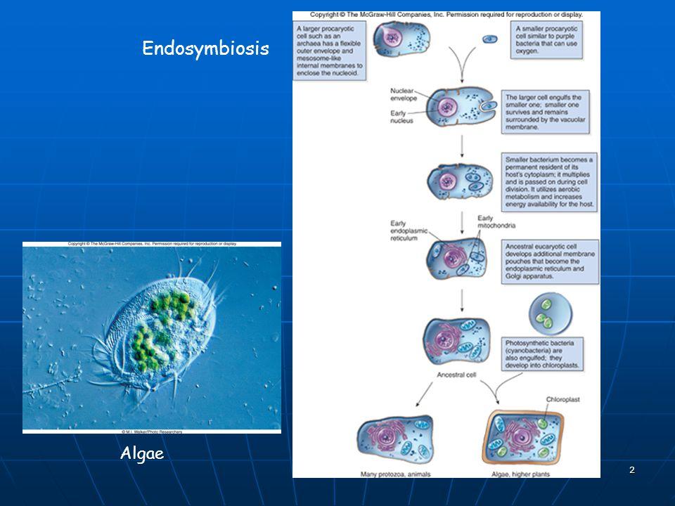 Endosymbiosis Algae