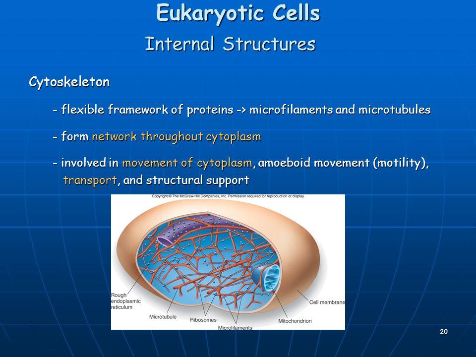Eukaryotic Cells Internal Structures Cytoskeleton