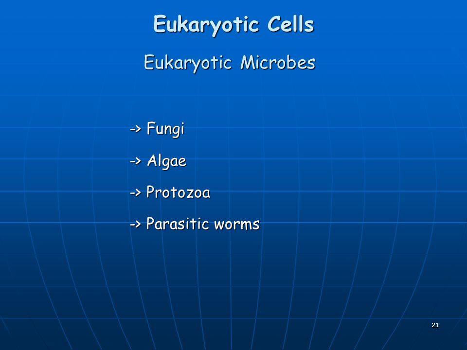 Eukaryotic Cells Eukaryotic Microbes -> Fungi -> Algae