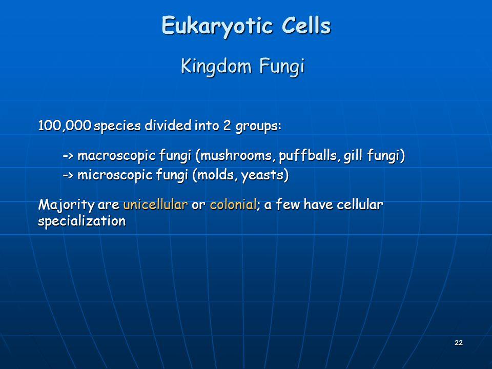 Eukaryotic Cells Kingdom Fungi 100,000 species divided into 2 groups: