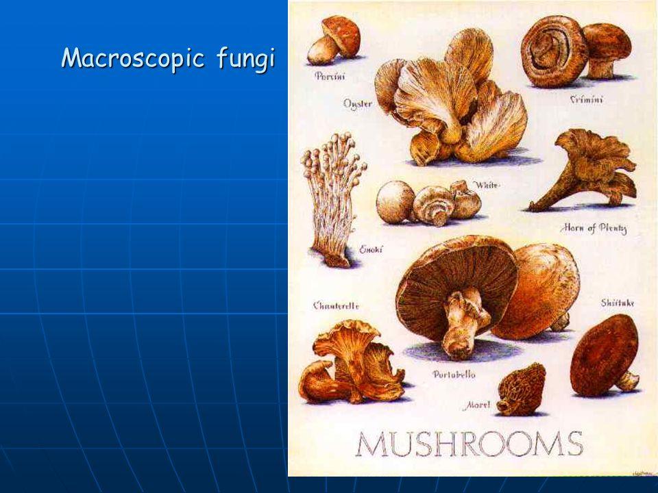 Macroscopic fungi