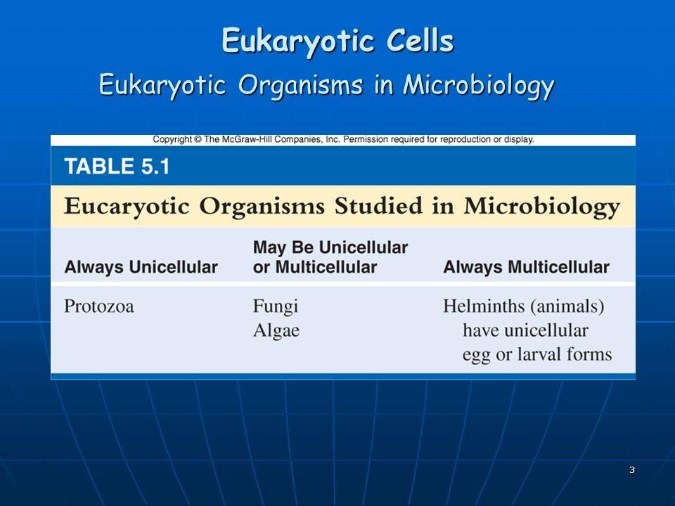 Eukaryotic Organisms in Microbiology