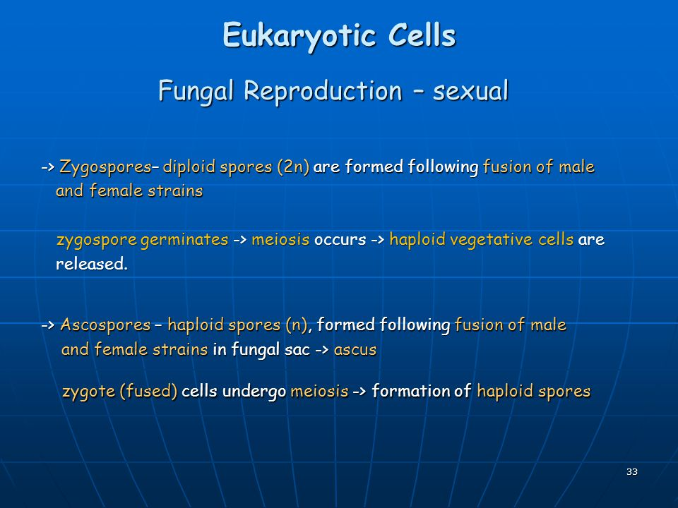 Fungal Reproduction – sexual