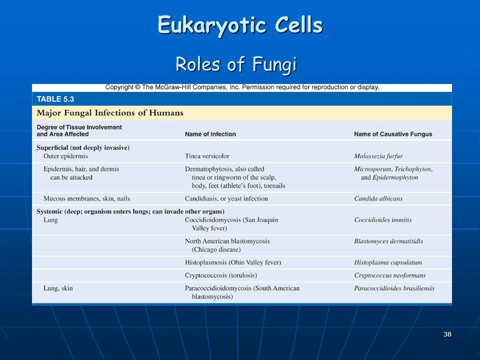 Eukaryotic Cells Roles of Fungi