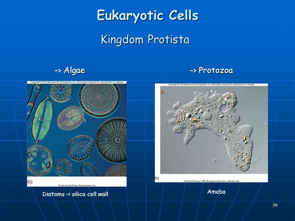 Eukaryotic Cells Kingdom Protista -> Algae -> Protozoa Ameba