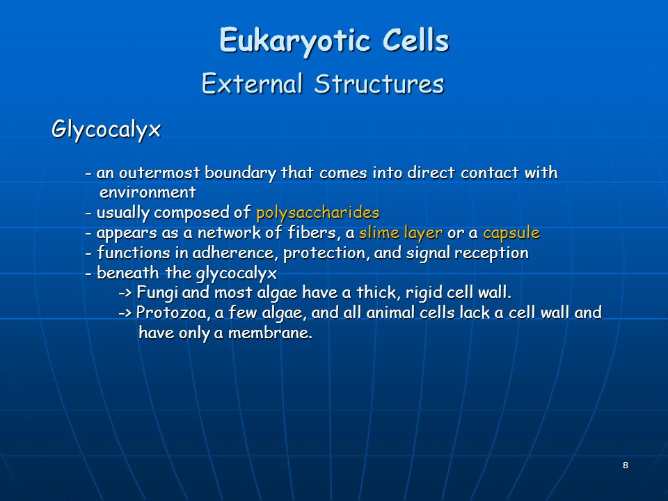 Eukaryotic Cells External Structures Glycocalyx