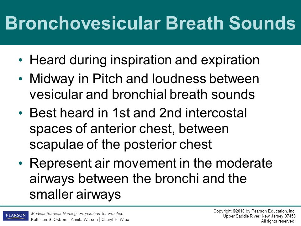 Bronchovesicular Breath Sounds
