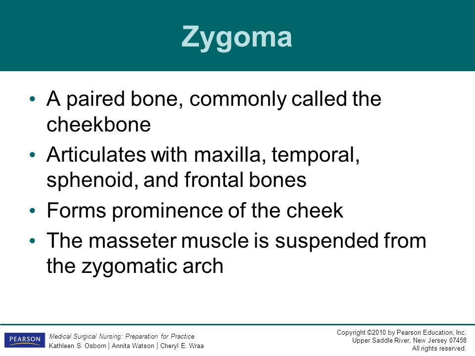 Zygoma A paired bone, commonly called the cheekbone