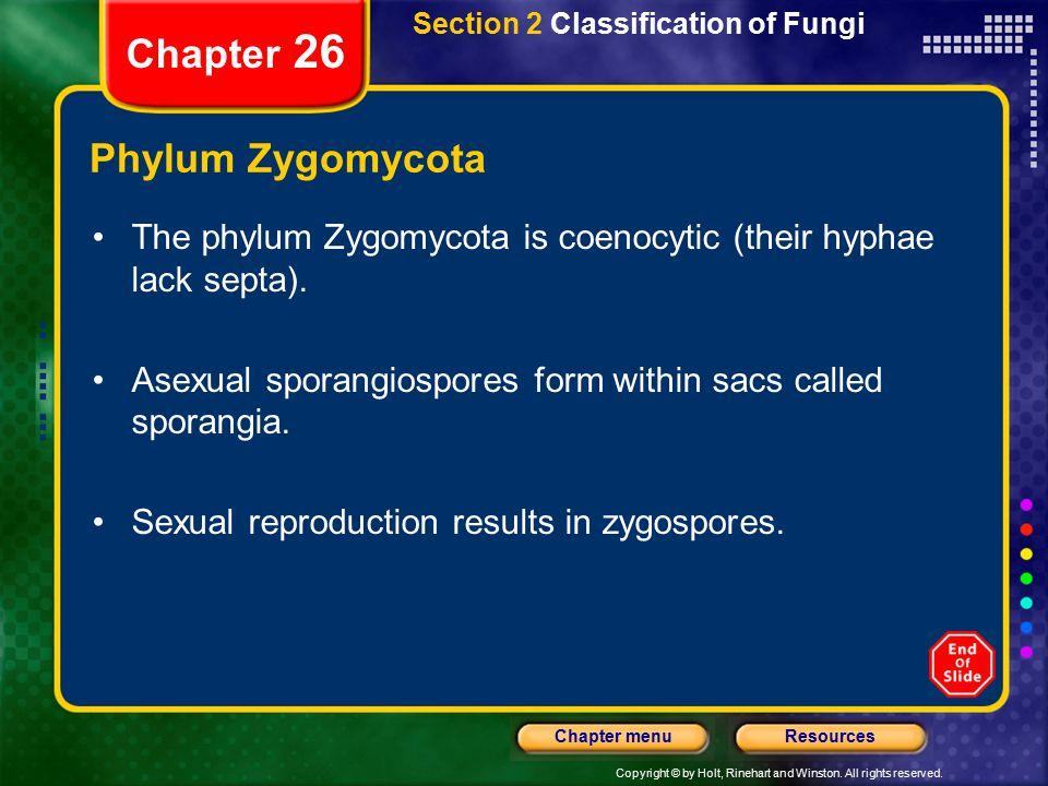 Chapter 26 Phylum Zygomycota