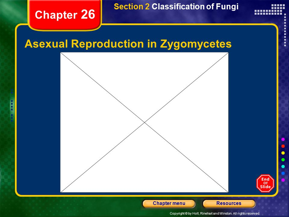 Asexual Reproduction in Zygomycetes