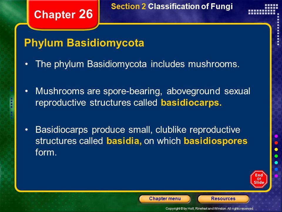Chapter 26 Phylum Basidiomycota