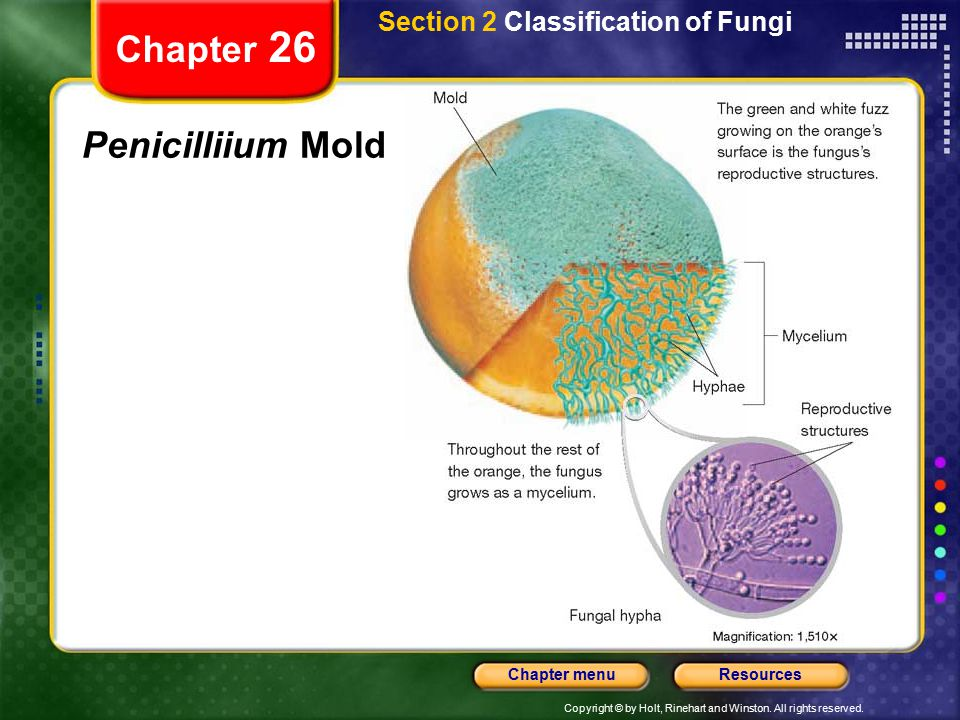 Section 2 Classification of Fungi