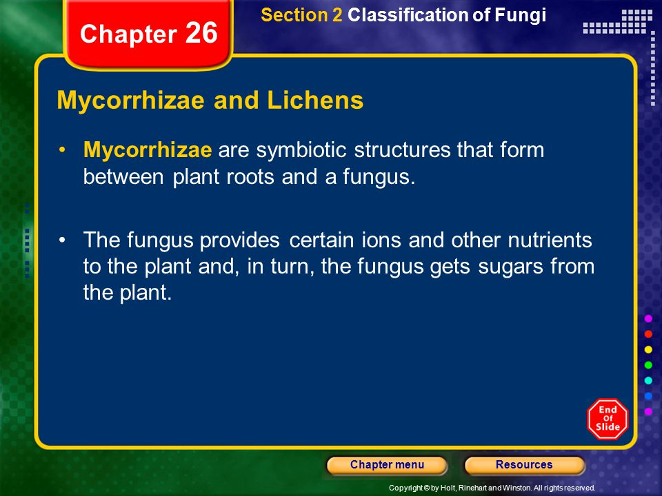 Mycorrhizae and Lichens