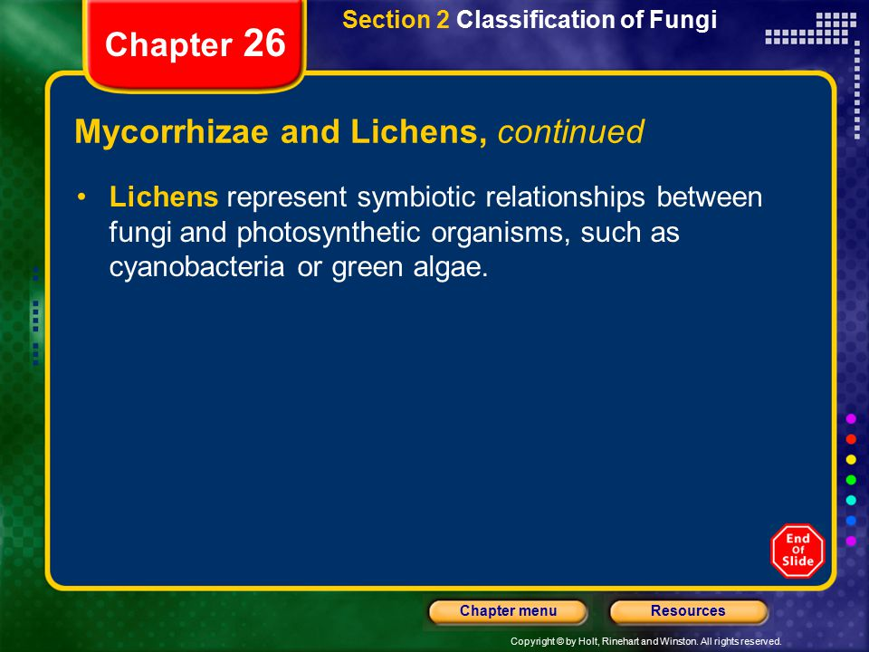 Mycorrhizae and Lichens, continued
