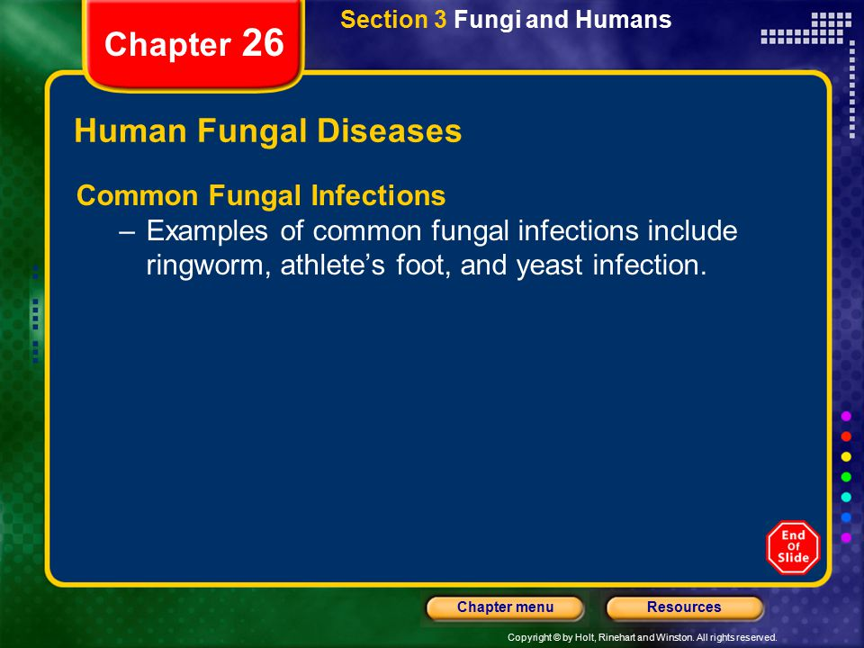 Chapter 26 Human Fungal Diseases Common Fungal Infections