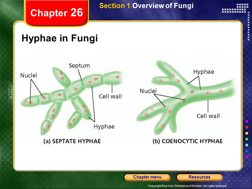 Section 1 Overview of Fungi