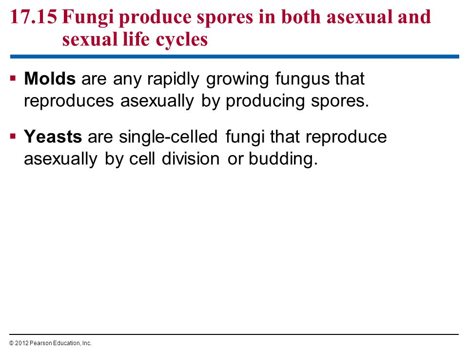 17.15 Fungi produce spores in both asexual and sexual life cycles