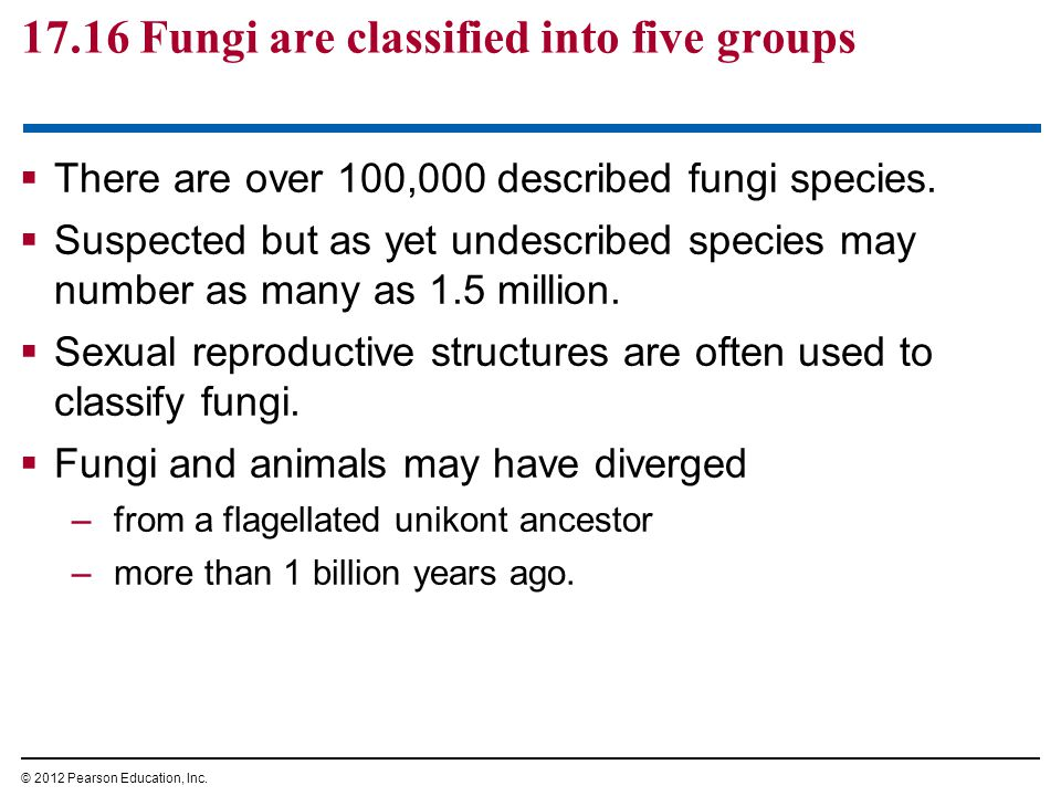 17.16 Fungi are classified into five groups