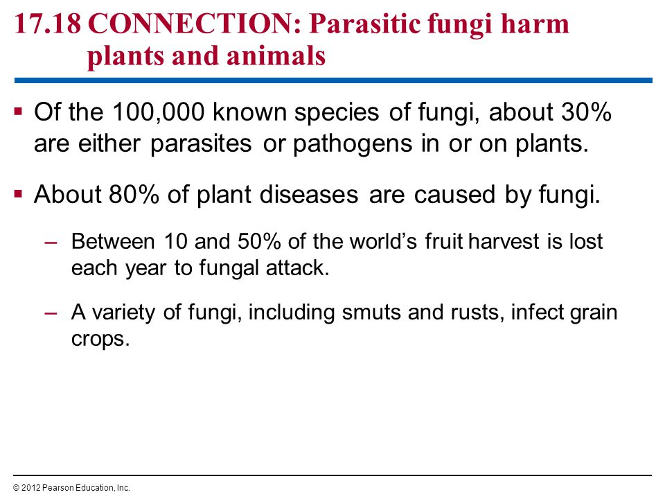 17.18 CONNECTION: Parasitic fungi harm plants and animals
