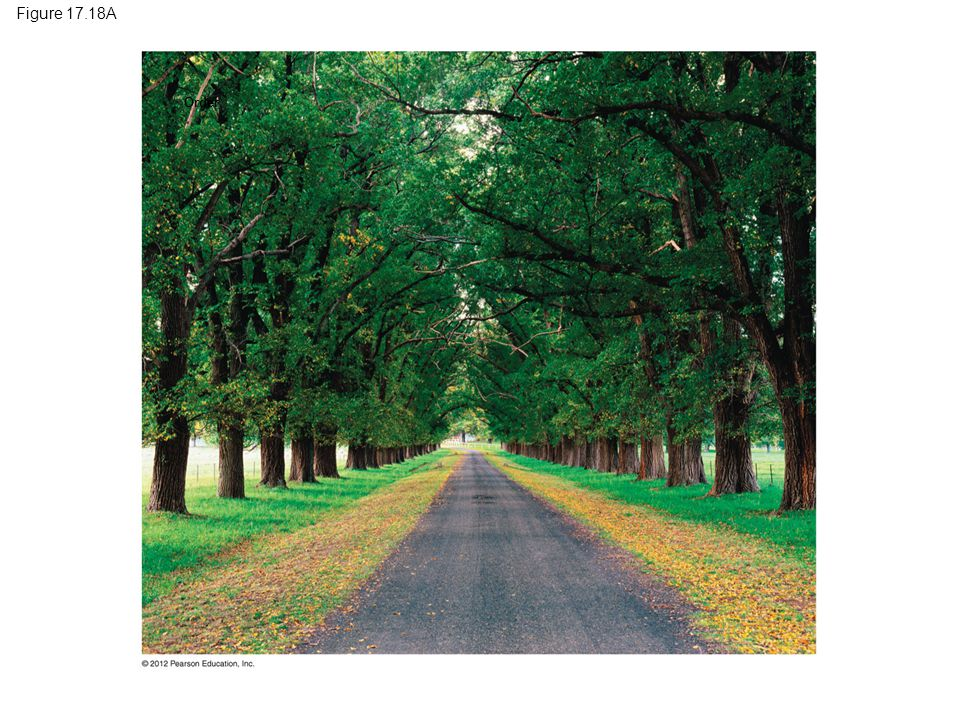 Figure 17.18A Order. Figure 17.18A Stately English elms in Australia, unaffected by Dutch elm disease.