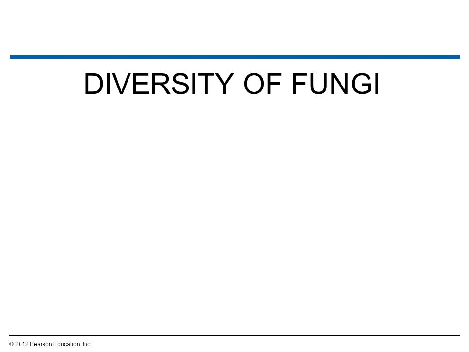 DIVERSITY OF FUNGI © 2012 Pearson Education, Inc. 2