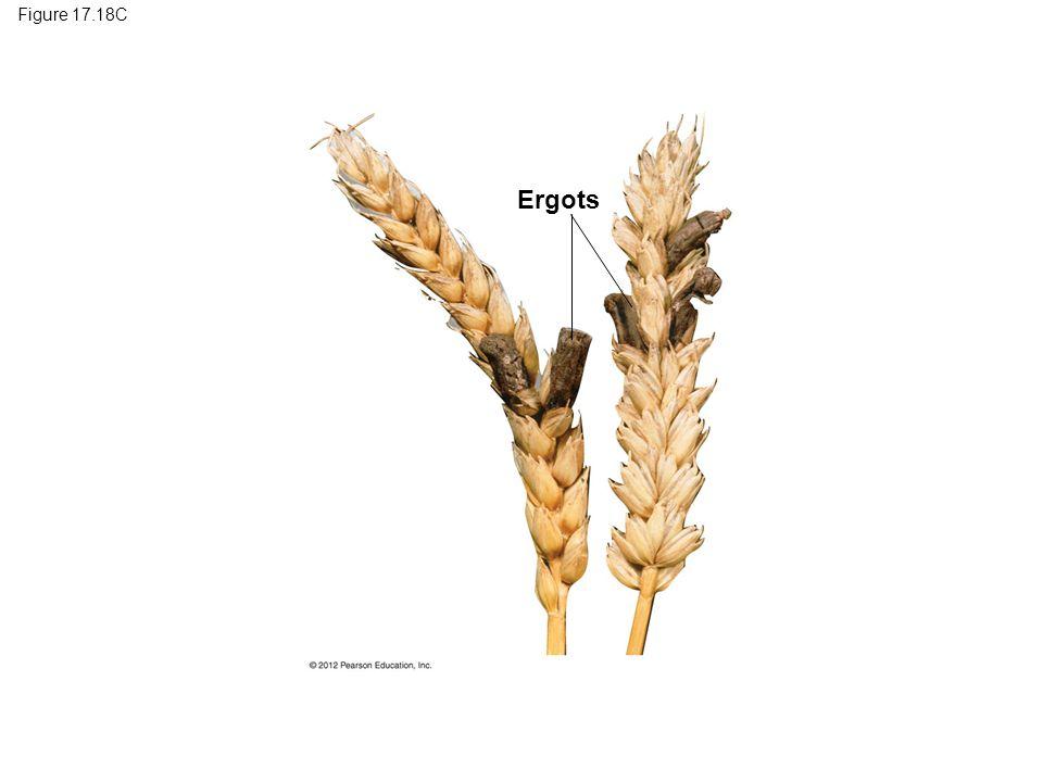 Figure 17.18C Ergots Figure 17.18C Ergots on rye 20