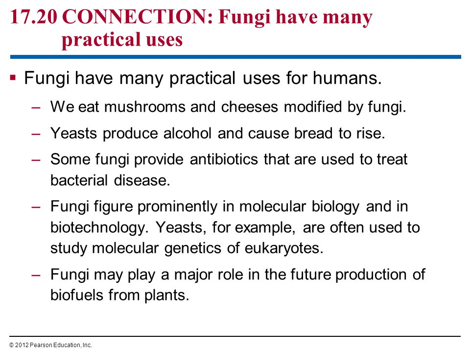 17.20 CONNECTION: Fungi have many practical uses