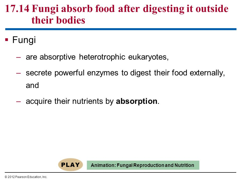 17.14 Fungi absorb food after digesting it outside their bodies