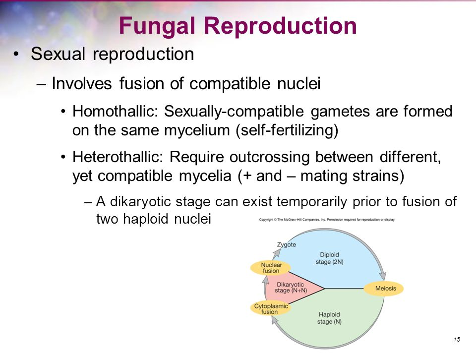 Fungal Reproduction Sexual reproduction