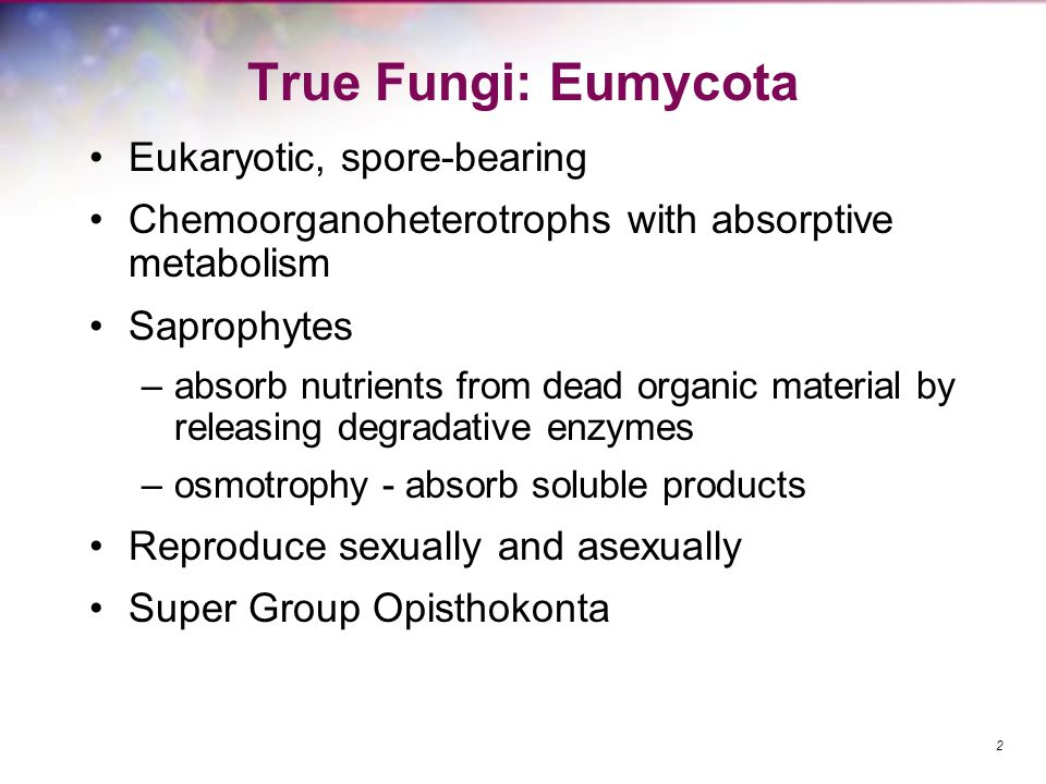 True Fungi: Eumycota Eukaryotic, spore-bearing