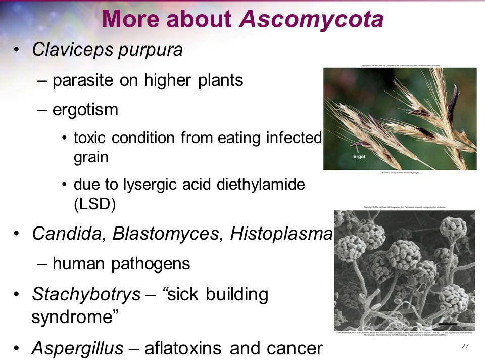 More about Ascomycota Claviceps purpura