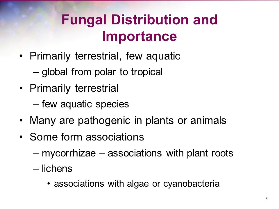 Fungal Distribution and Importance
