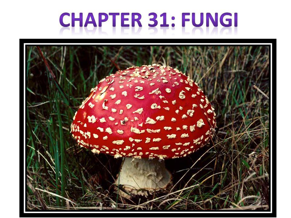 Chapter 31: Fungi