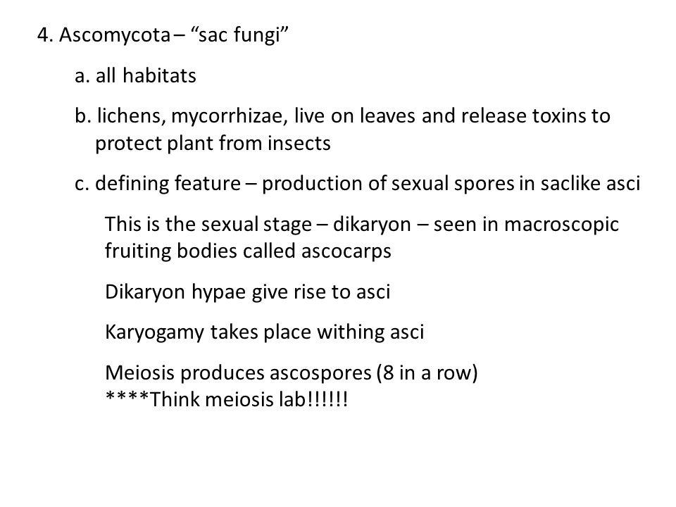 4. Ascomycota – sac fungi
