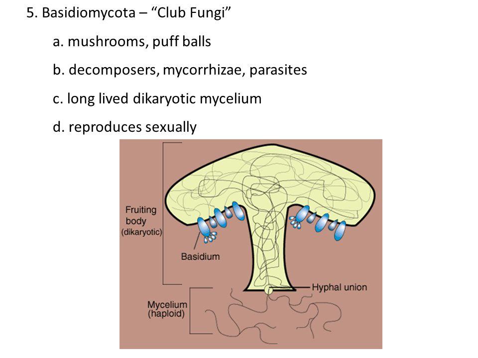 5. Basidiomycota – Club Fungi