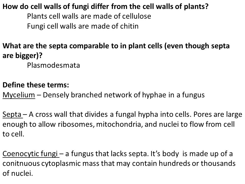 How do cell walls of fungi differ from the cell walls of plants