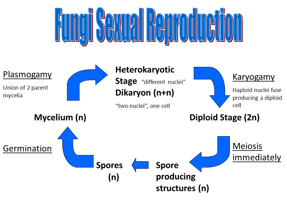 Fungi Sexual Reproduction