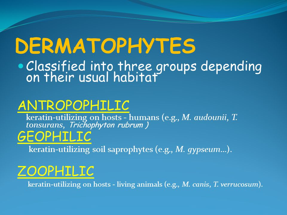 DERMATOPHYTES Classified into three groups depending on their usual habitat. ANTROPOPHILIC.