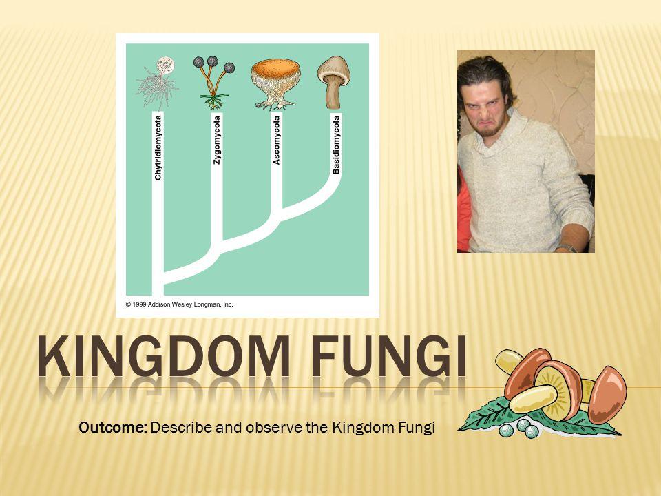 Kingdom Fungi Outcome: Describe and observe the Kingdom Fungi